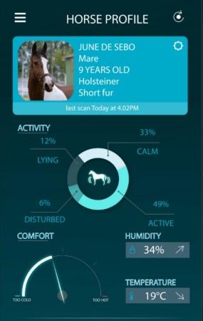 horse-arioneo-profile