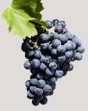 history-item-5-grappe-bottom